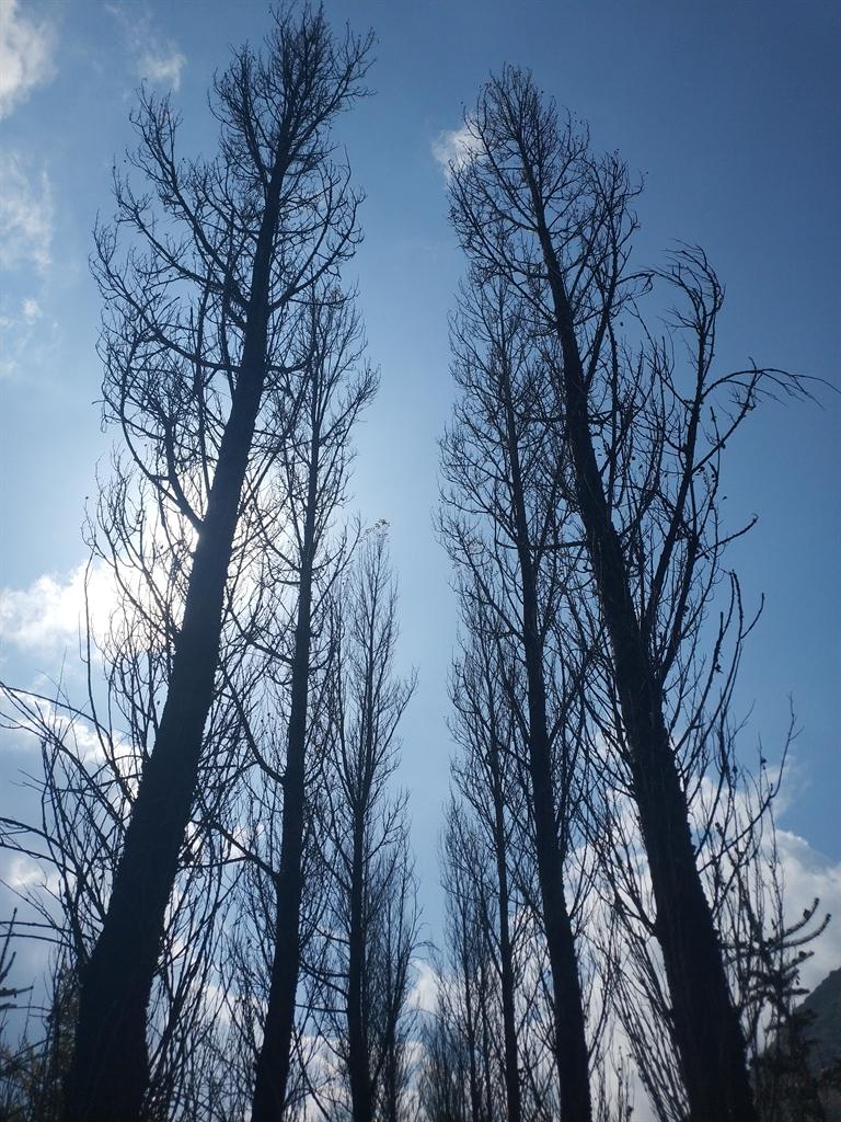 十种最具发展前景的耐寒耐旱树种_腾讯网