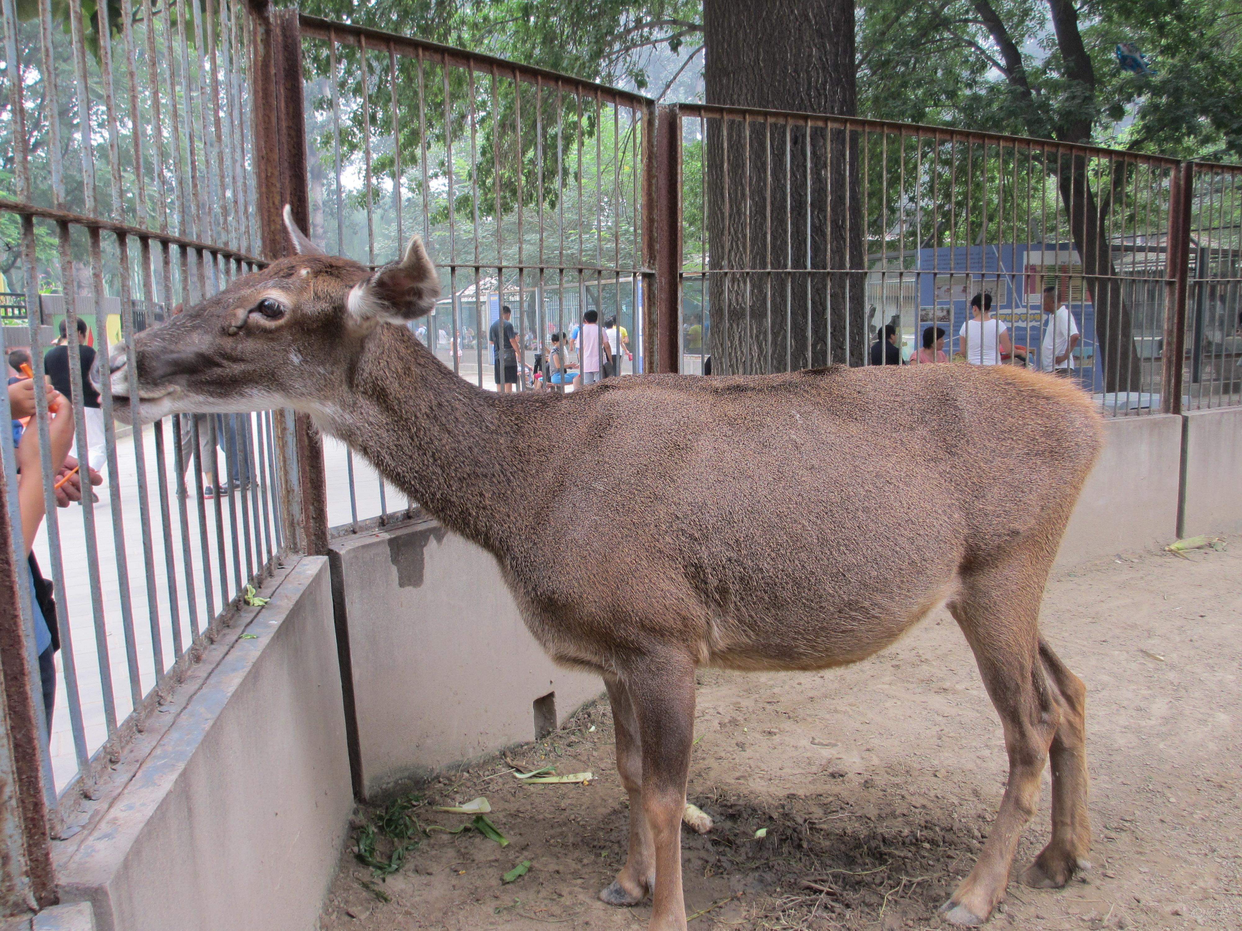 【北京动物园(互动篇)】
