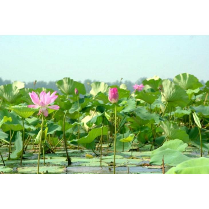 目的地 湖北 荆州 洪湖蓝田   24张照片 目的地介绍 蓝田生态旅游风景