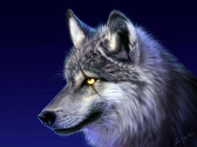 浏览相册_孤独狼的