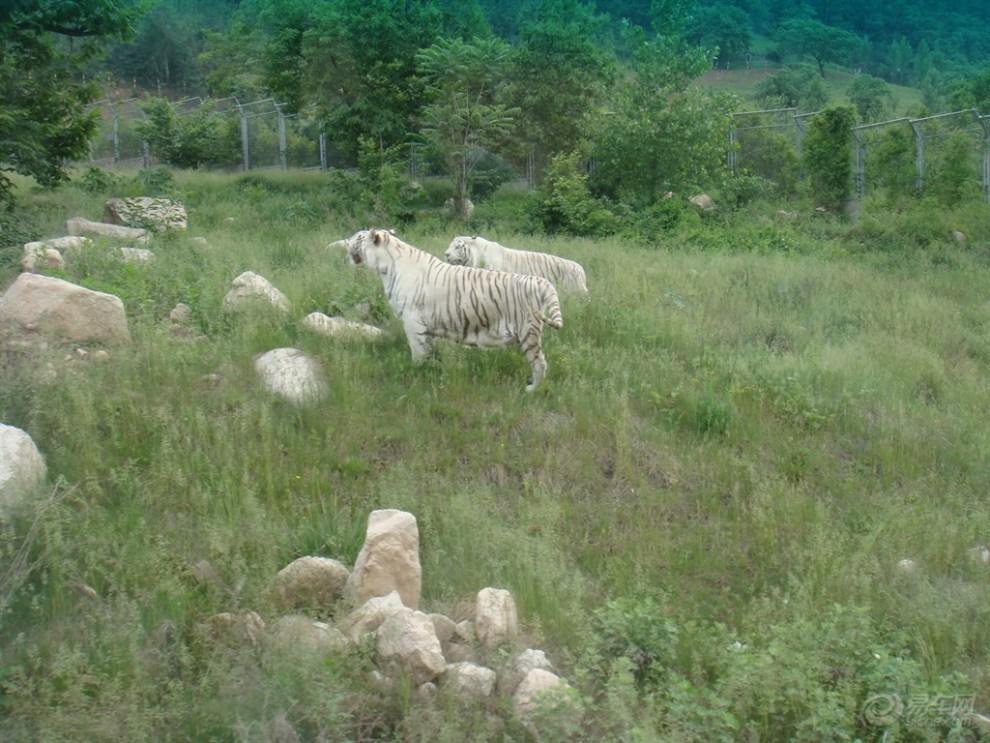【【原创首发】西安秦岭野生动物园随拍】_陕西社区