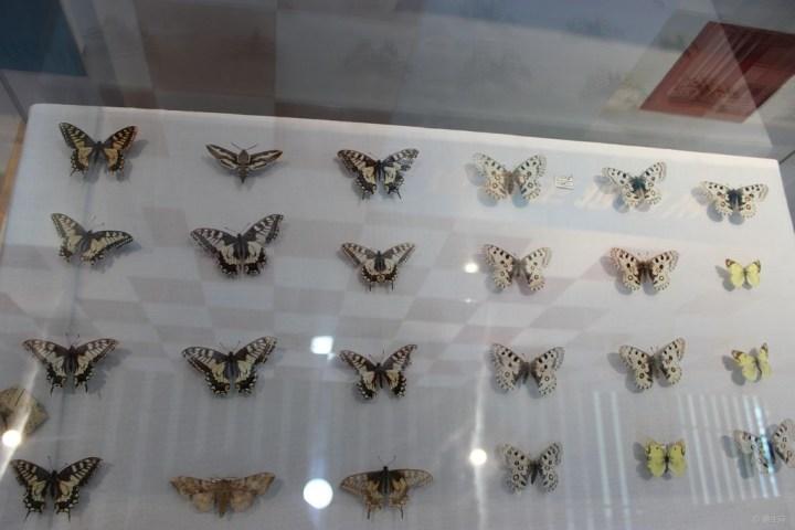 《精华帖大比拼》塞罕坝展览馆里的动物昆虫