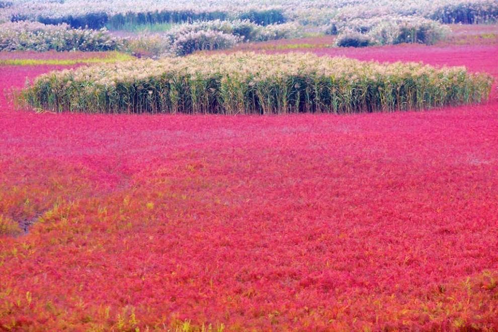 卜算子·红色湿地 - 火焰 - 火焰的博客