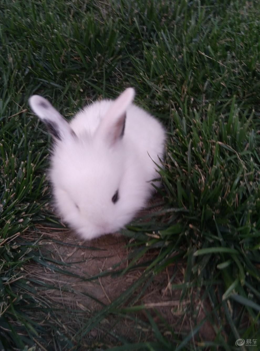 【小白兔】_宠物当家社区图片集锦_汽车论坛-易车网
