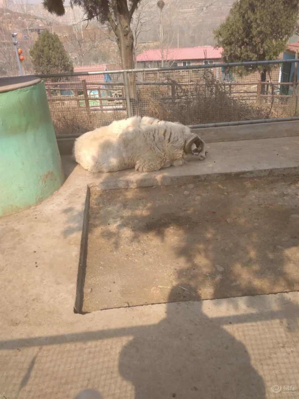 【五龙山野生动物园攻略值得一去】_河南游记杭州到下渚湖自驾游v攻略论坛图片