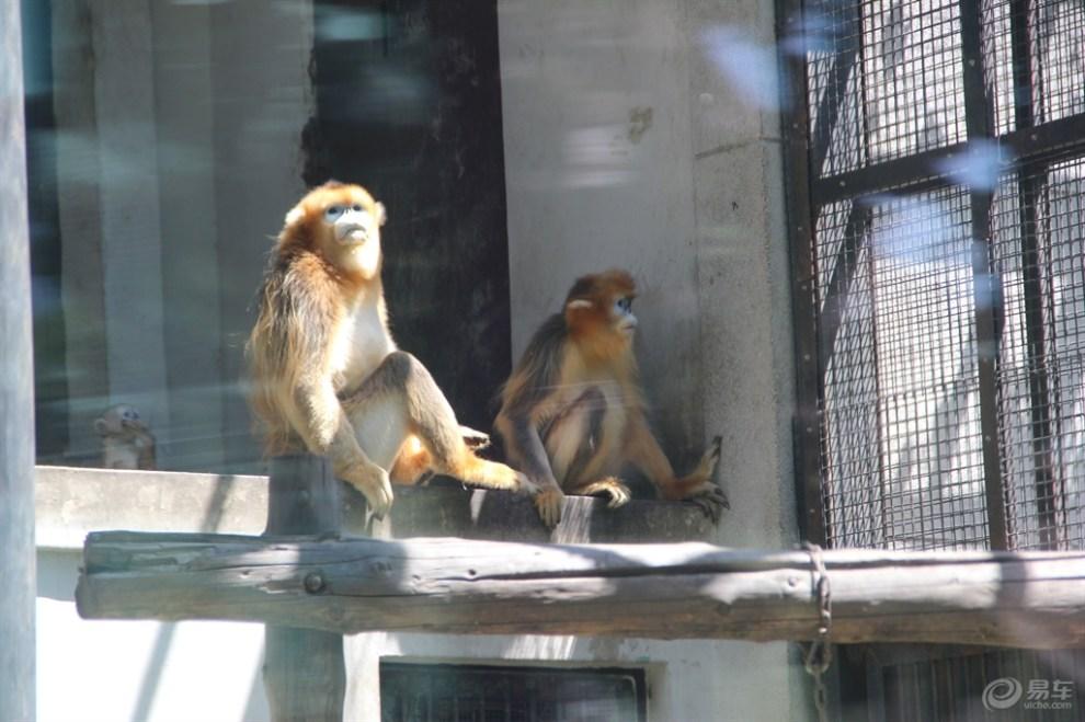 天津动物园猴子篇2