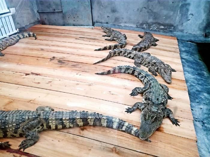 年末之游——台州湾野生动物园