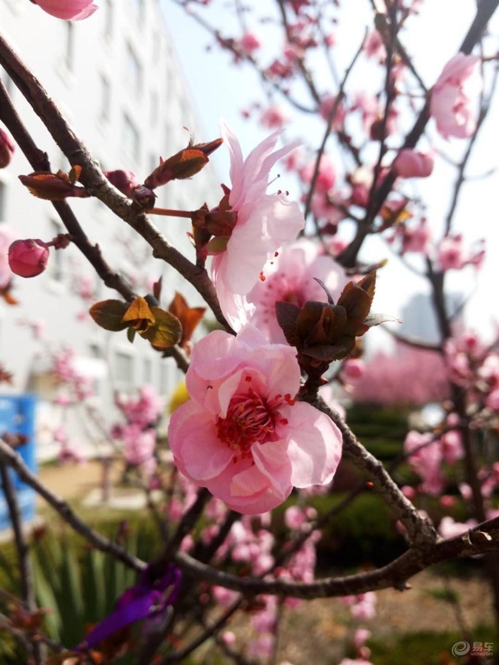春天的景色