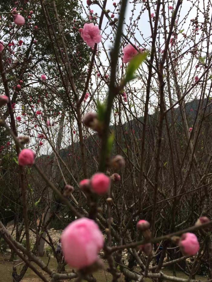 春天是万物复苏的季节,一切都那么美好!