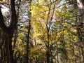 【游记】六里坪之秋