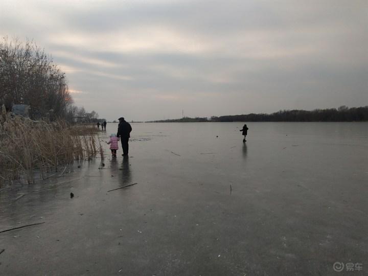 再探衡水湖,遇到了大水鸟