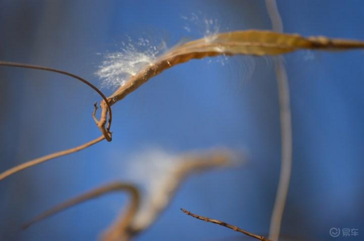 一树春风千万枝,嫩于金色软于丝
