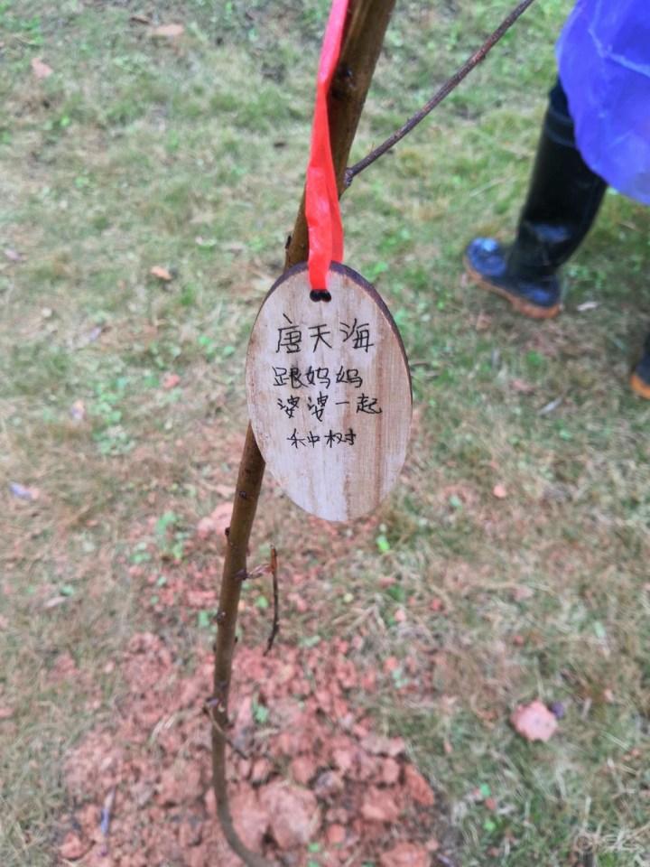#申精# 记斜风细雨中的亲子植树活动,意义非凡!