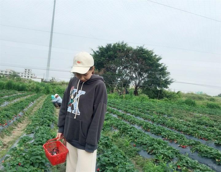 与帝豪出行--带着冰美眉去摘草莓