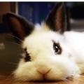 黑色の白兔
