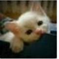 CS75猫儿