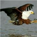 做鸟的翅膀