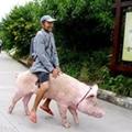骑猪追幸福
